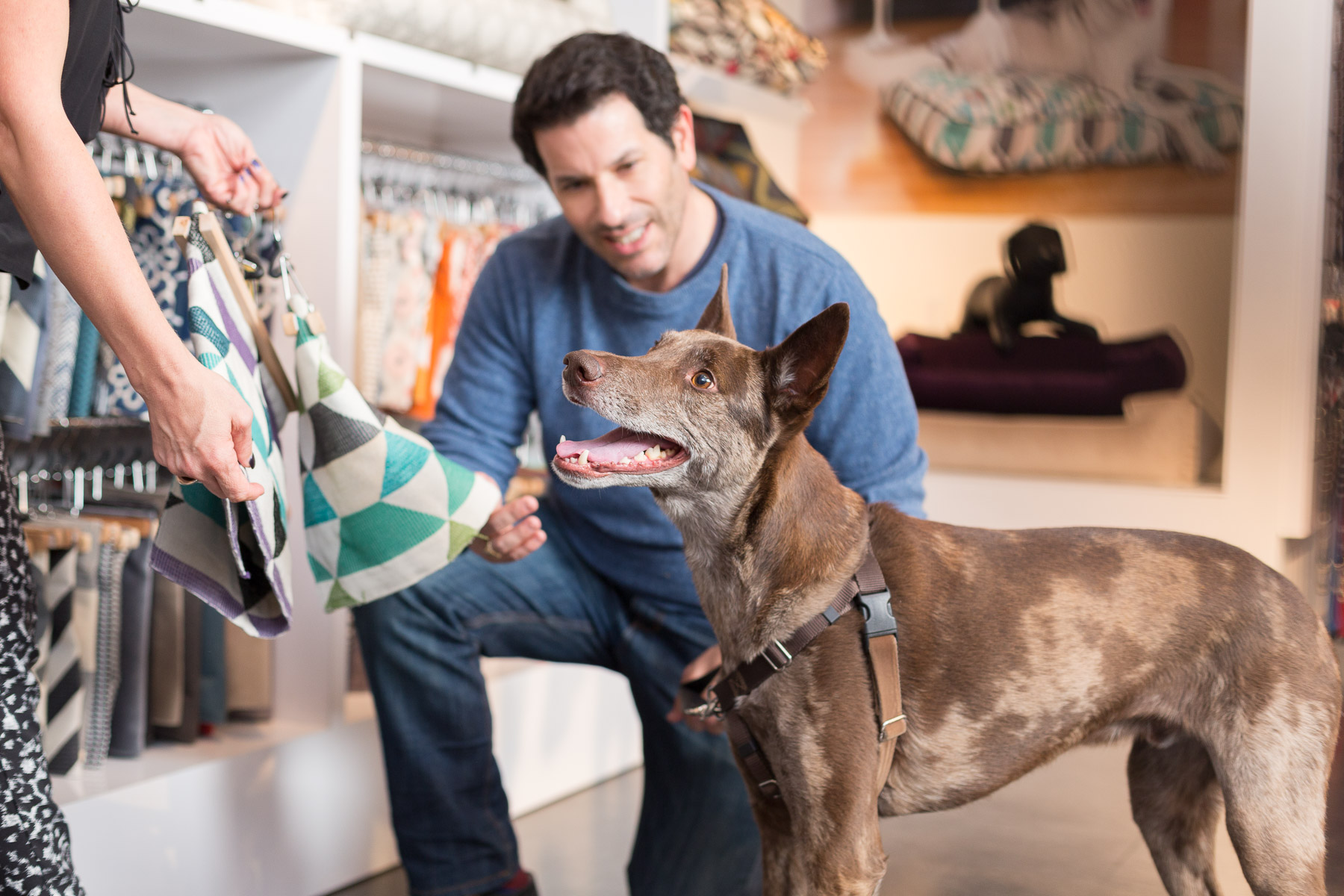 Owner with his senior brown Doberman buying fabric to customize his dog's bed.