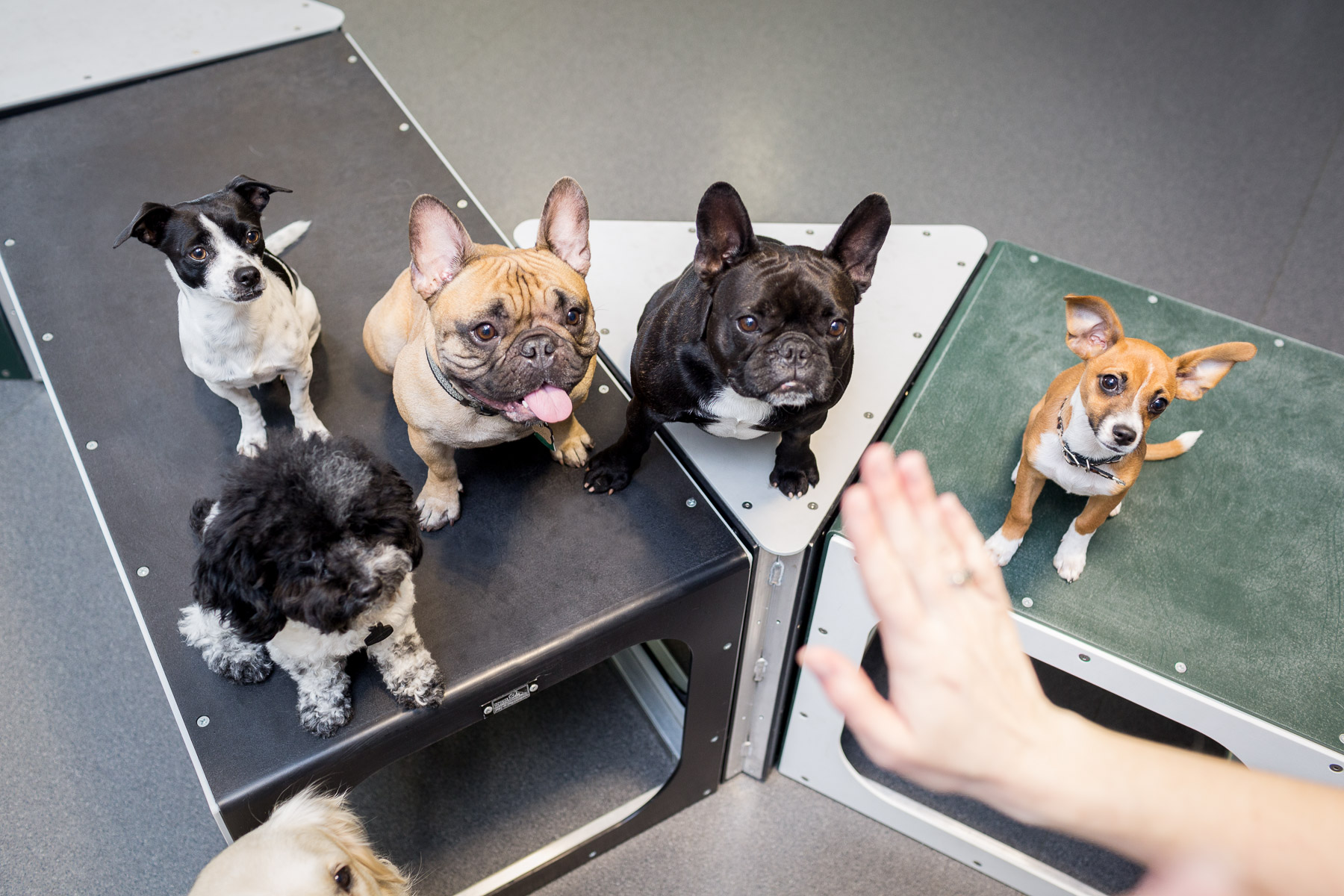 """Dog trainer commanding the dogs to """"Stay"""" for the shot."""