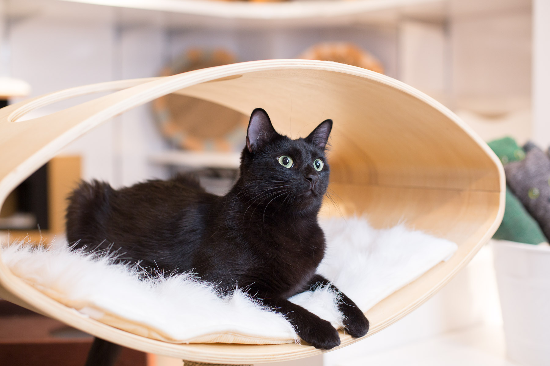 Cat lying on cat furniture specifically designed for comfort without giving up on style.
