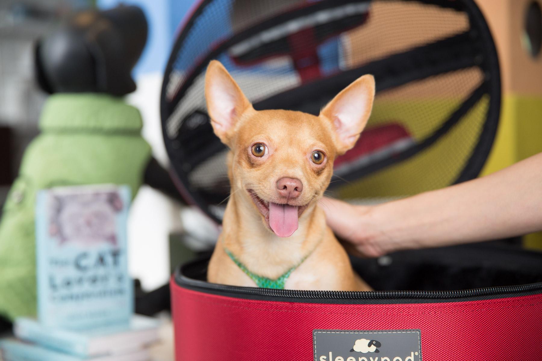 dog-smiling-happy-in-dog-carrier.jpg