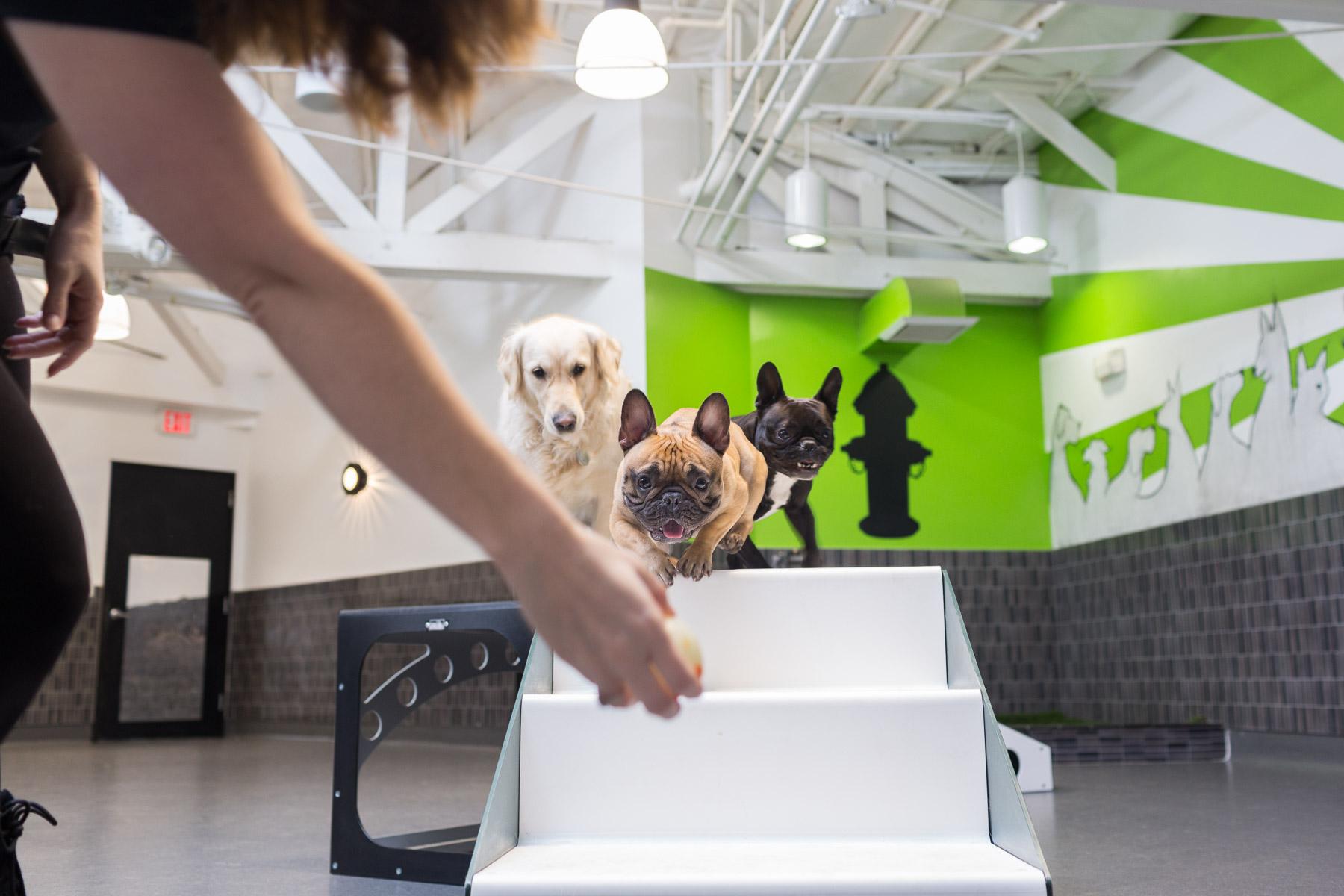 dogs-running-towards-ball-trainning-facility-pussy-pooch.jpg
