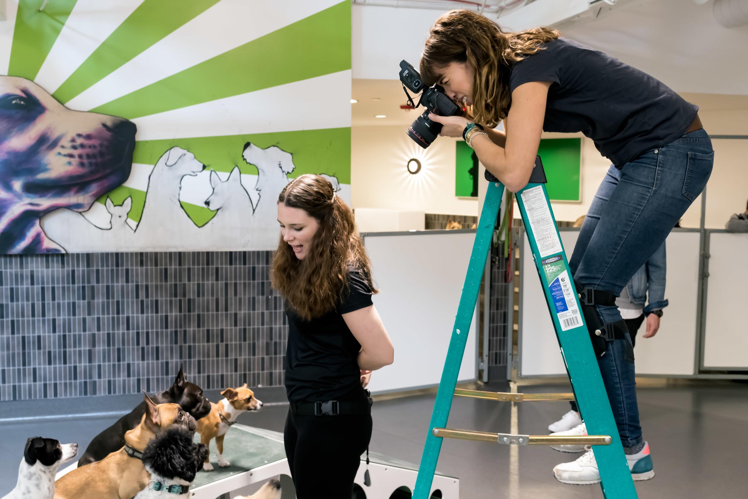 behind-the-scenes-dog-photographer-working-on-set-5.jpg