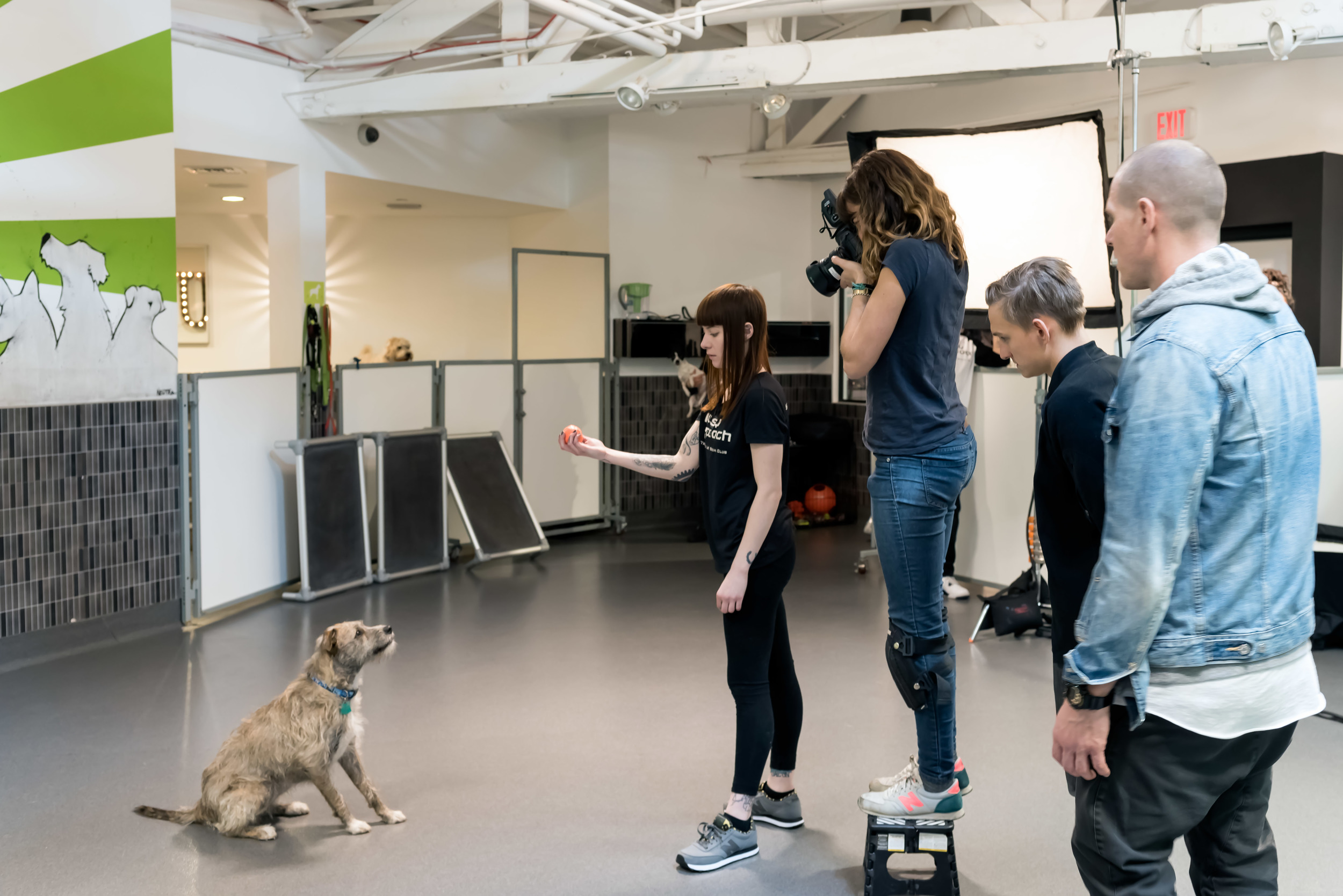 behind-the-scenes-dog-photographer-working-on-set-6.jpg