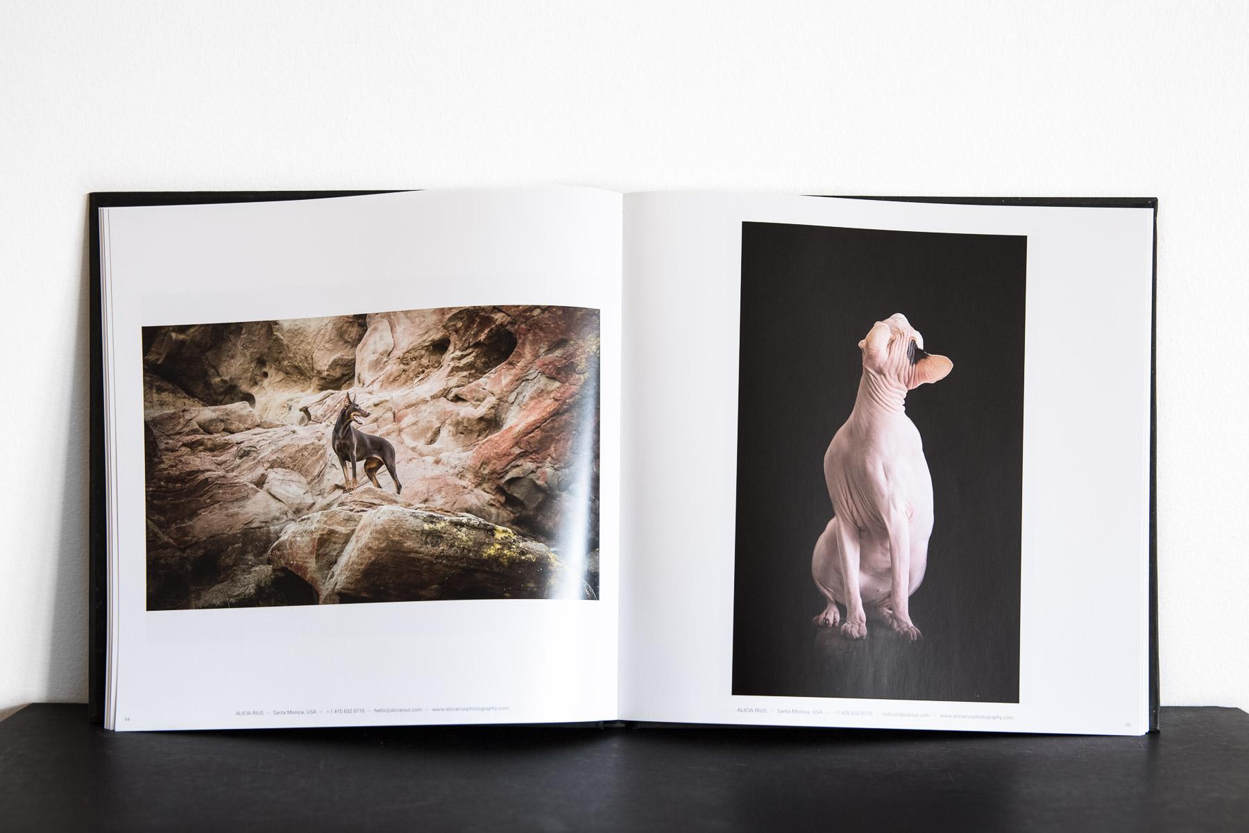 The two winning images. On the left: Dakota, the Doberman. On the right: Delilah, the Sphynx cat.