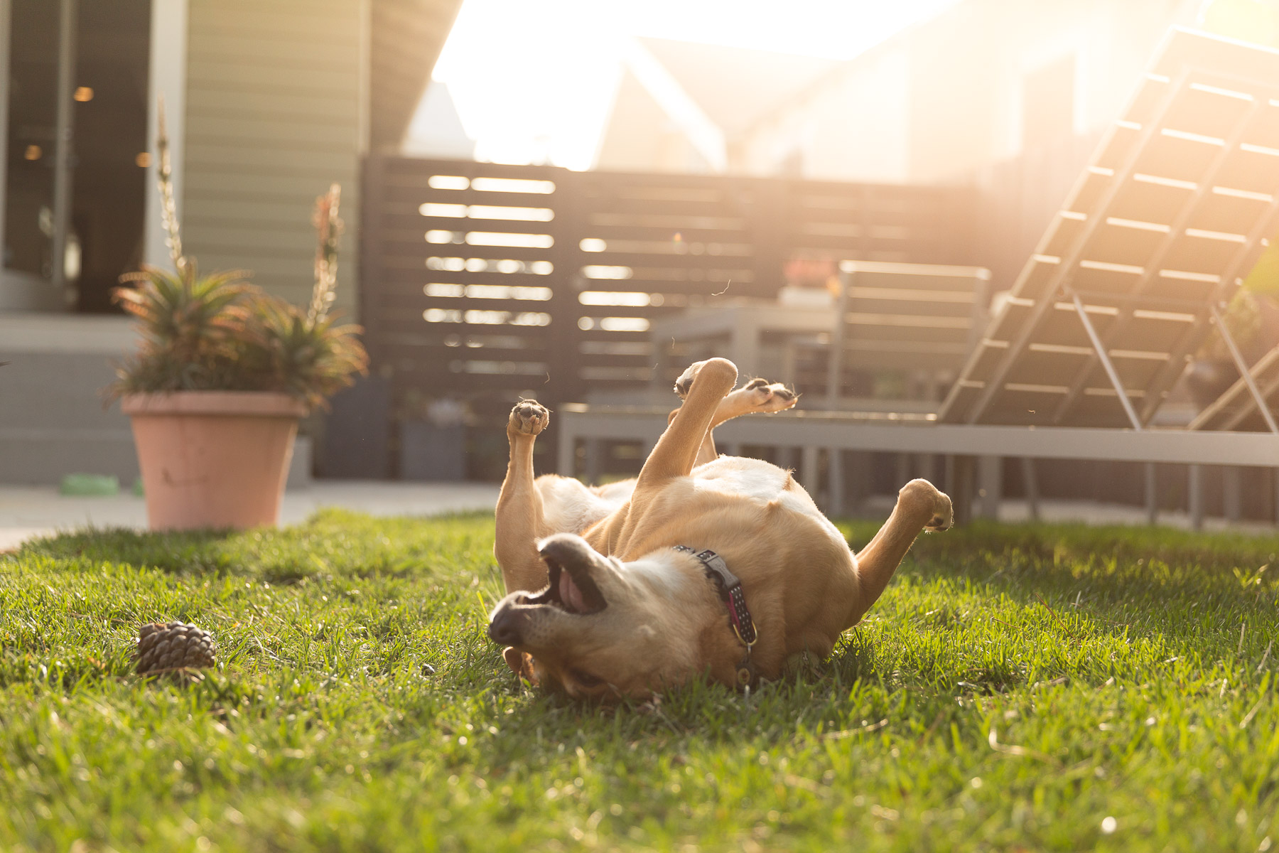 outdoor-dog-photography-no-flash
