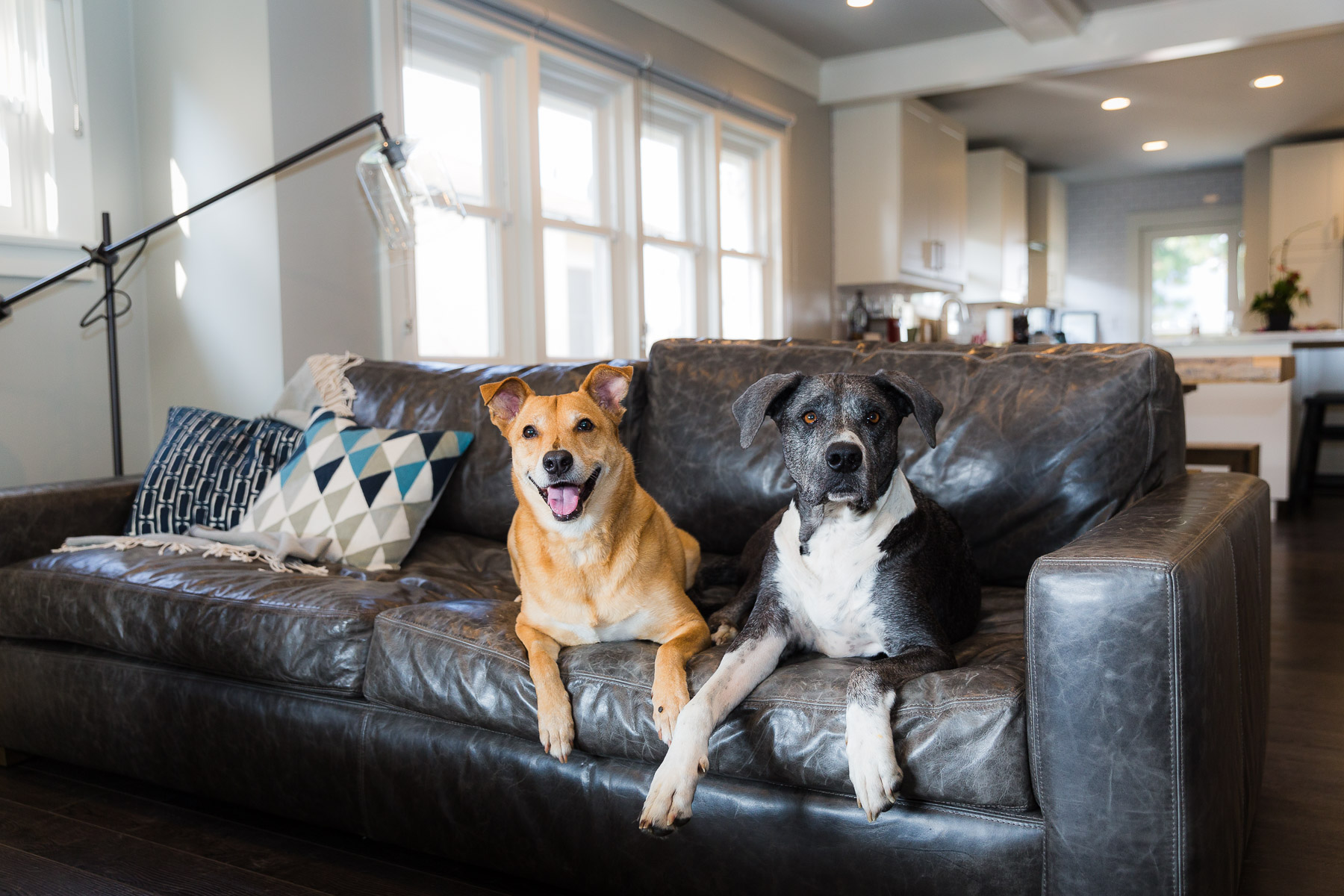 how-to-photograph-multiple-pets