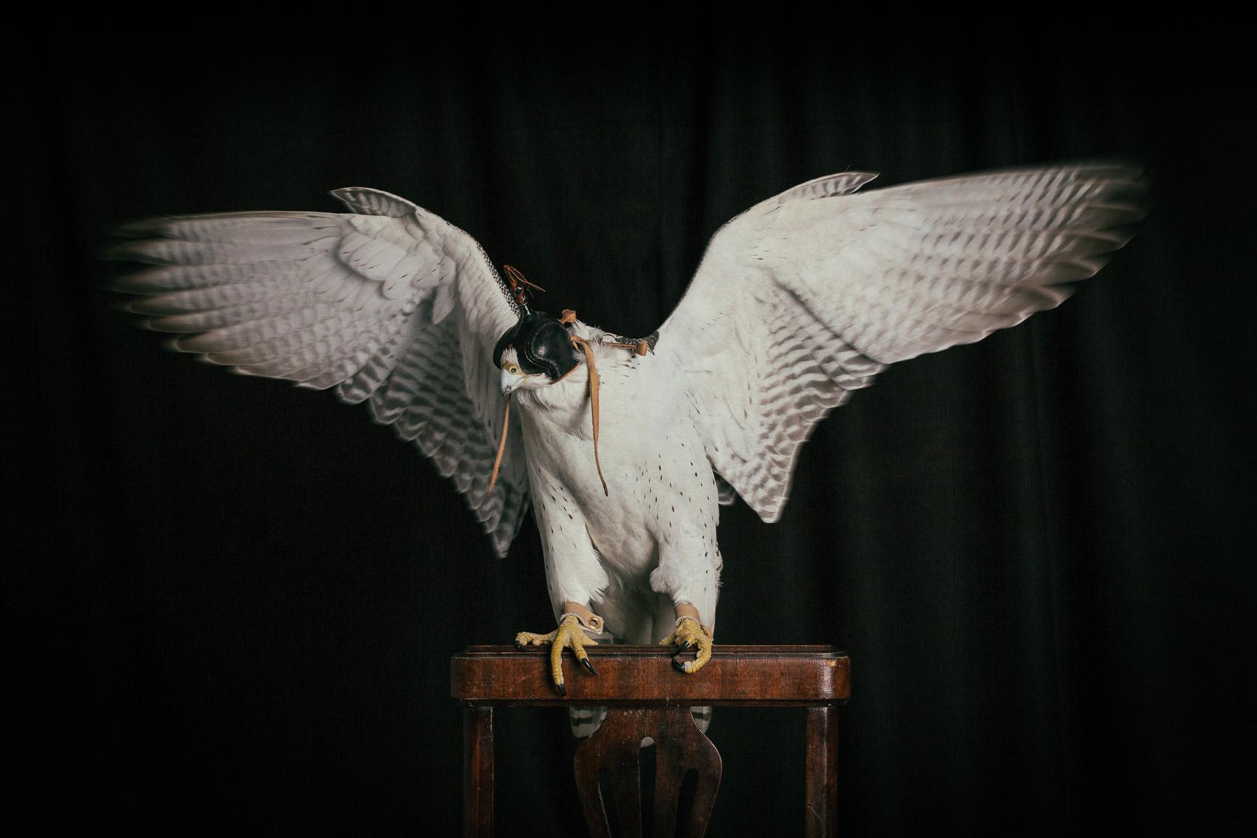 hawk-with-open-wings-animal-photographer.jpg