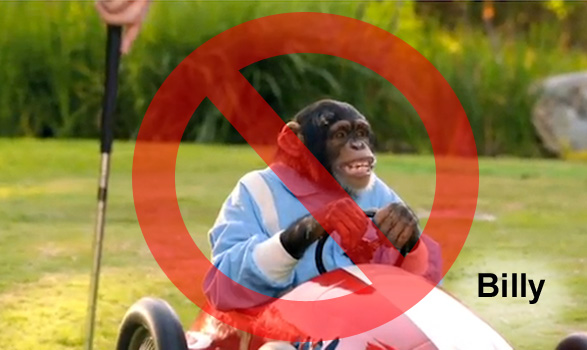 Billy, an actor chimpanzee has been used in many commercials.