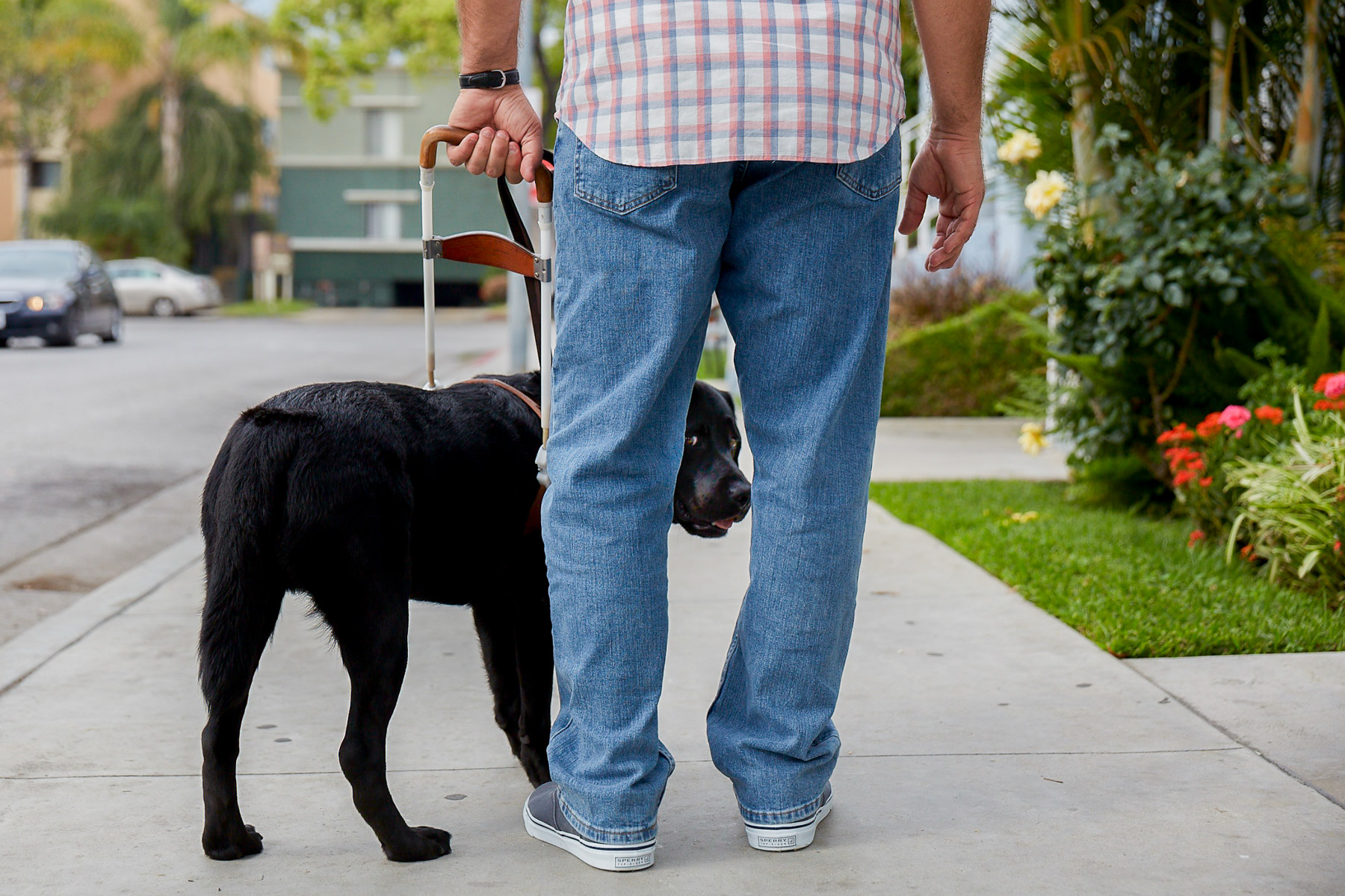 labrador-dog-guidance-for-blind-person-dog-photographer-los-angeles.jpg