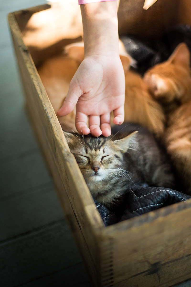 girl-caressing-kitty-box-with-cats-pet-photographer.jpg