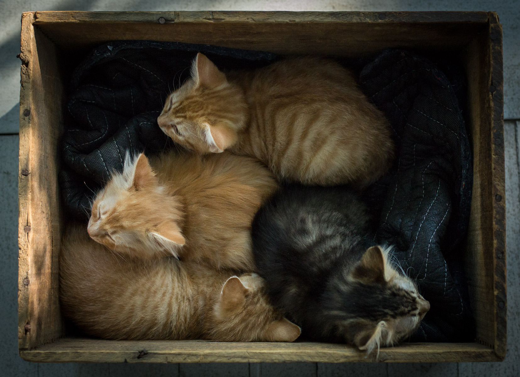 box-with-cat-litter-baby-cats-animal-photographer.jpg