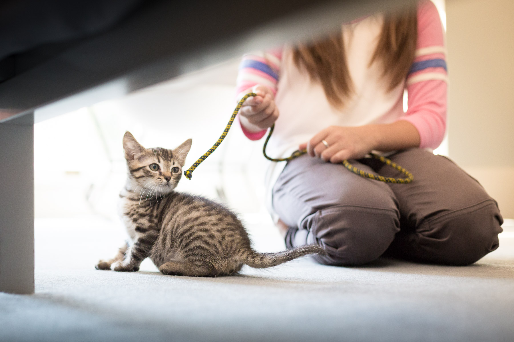 girl-playing-with-cat-in-bedroom-cat-photography.jpg