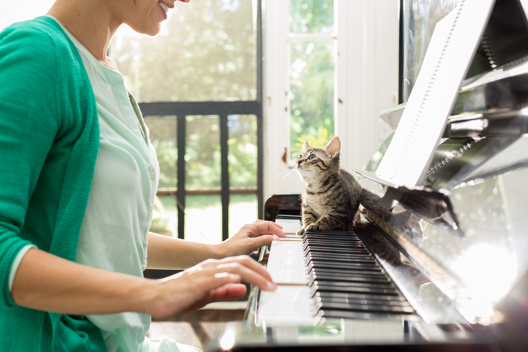 kitty-on-piano-keyboards.jpg