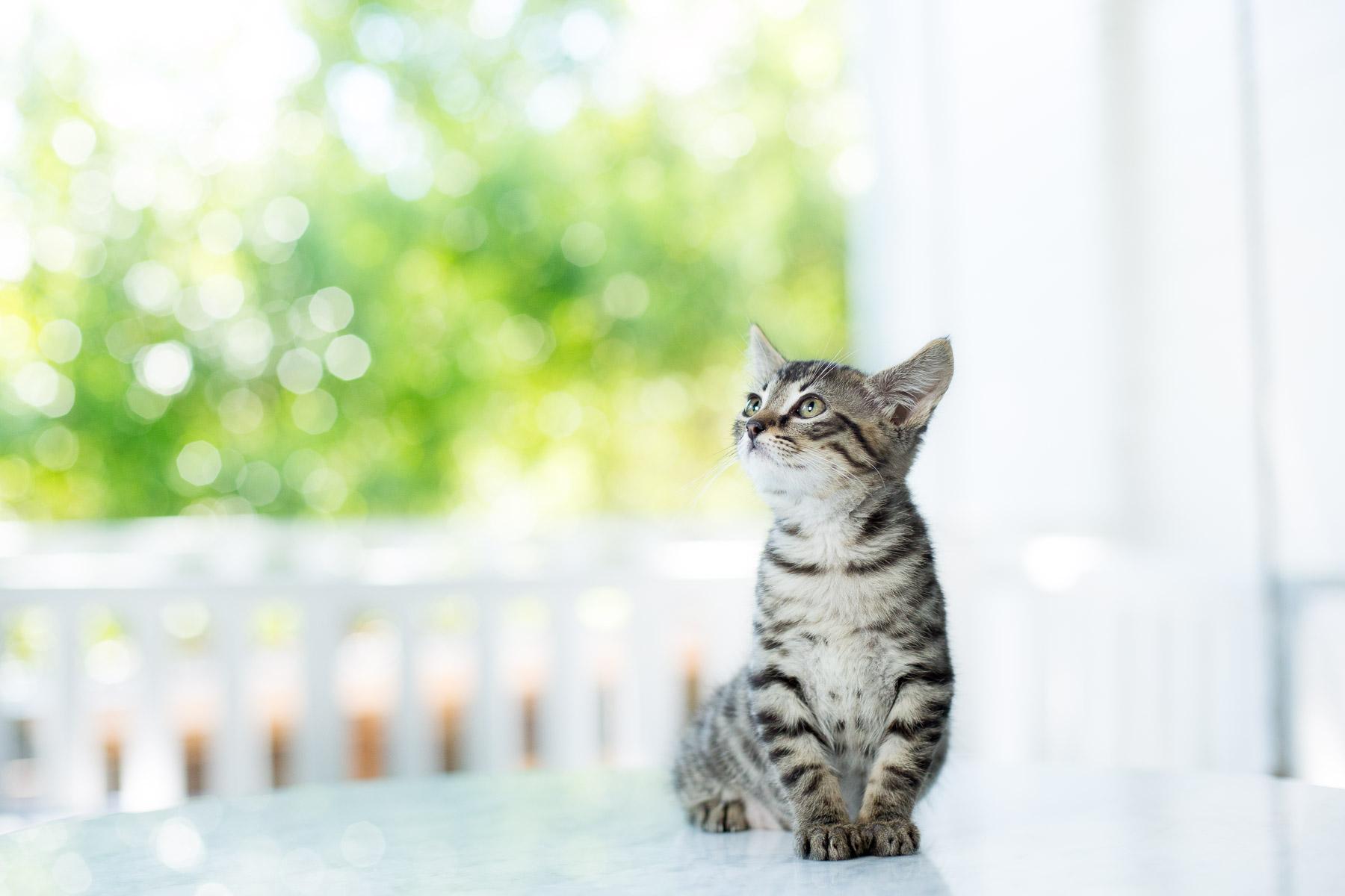 little-kitty-cat-portrait-animal-photographer.jpg