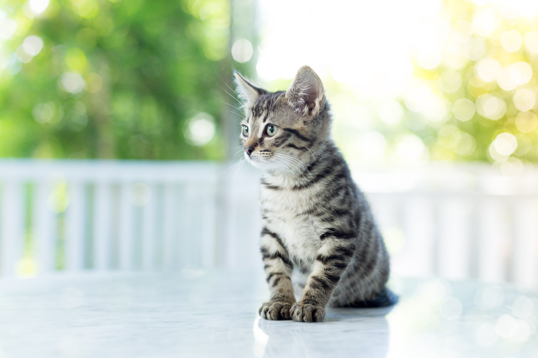 little-kitty-cat-portrait-animal-photography.jpg