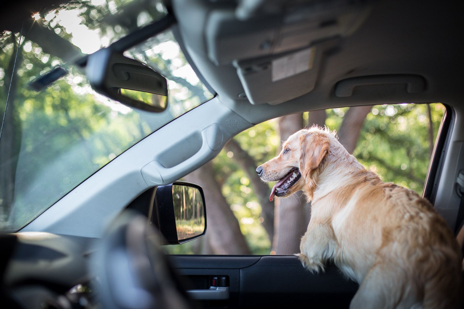 dog-golden-retriever-puppy-looking-out-car-window.jpg
