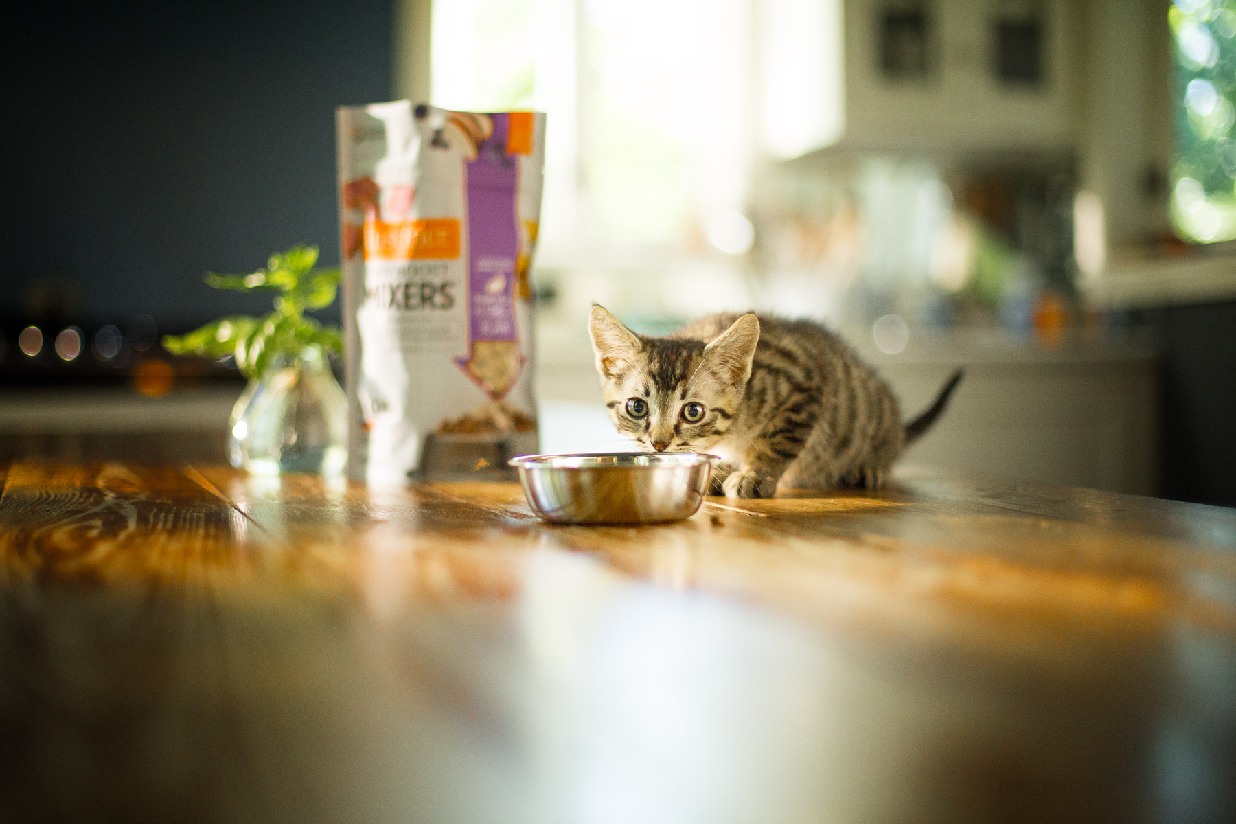 cat-eating-from-bowl-food-kitchen.jpg