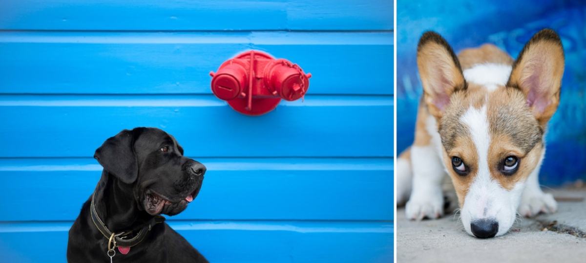 Look for bright and colorful backgrounds to create fun and vivid portraits.