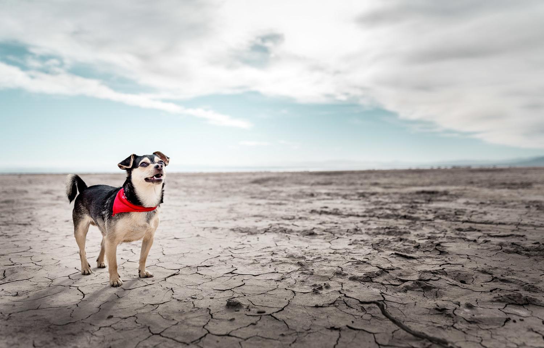 dog-in-desert-salton-sea-dog-photographer-alicia-rius-los-angeles.jpg