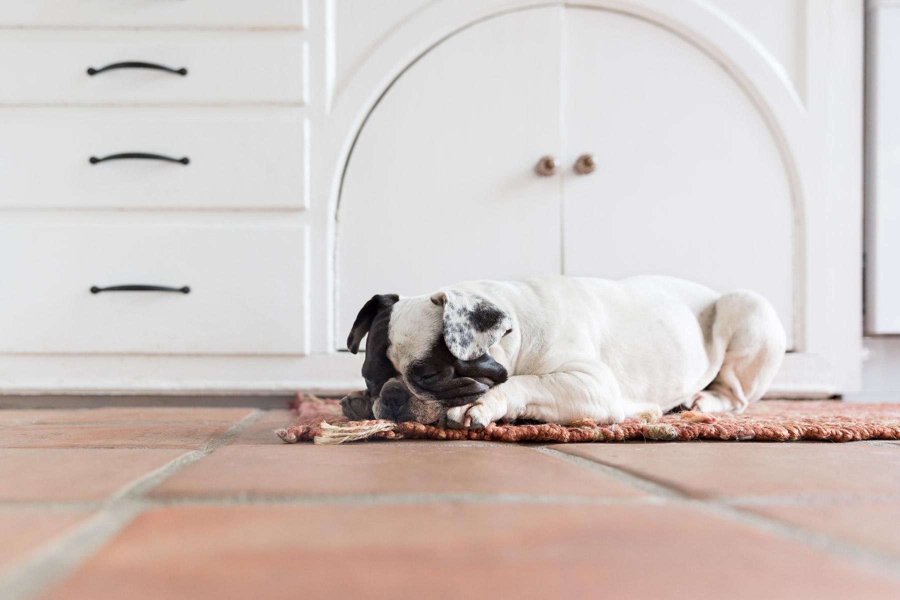 french-bulldog-sleeping-on-rug-dog-photo-pet-photographer.jpg