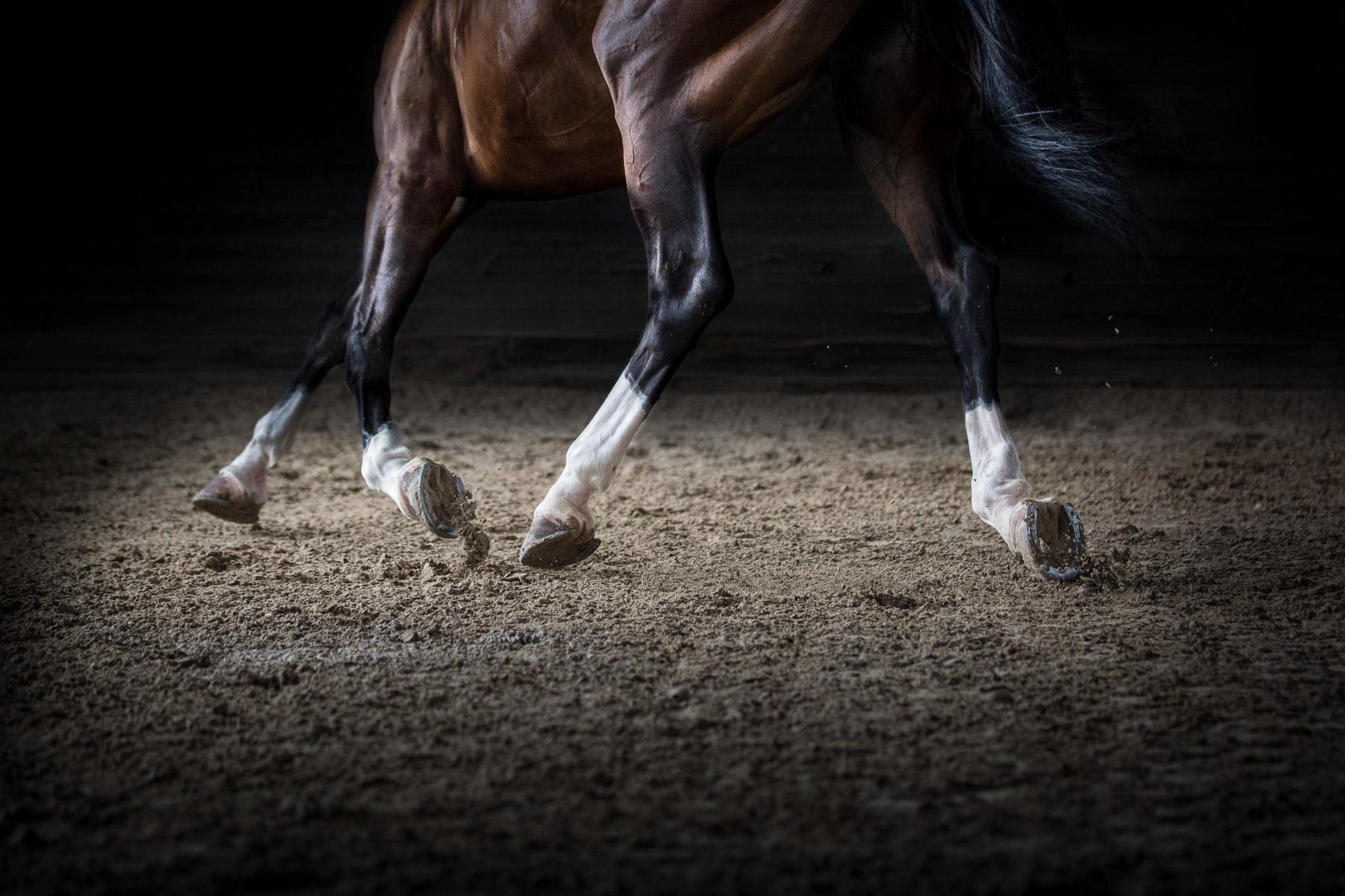 equine-horse-photography-horse-riding-fine-art.jpg