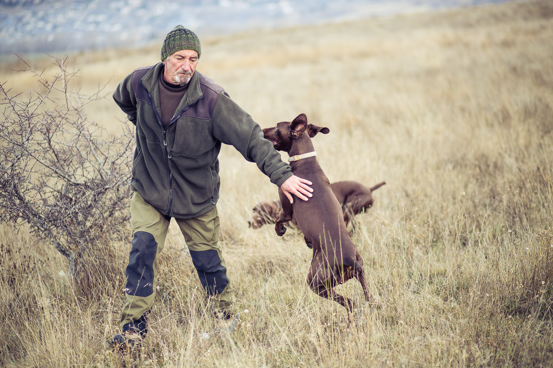 7dog-lifestyle-photographer-hunter-dogs-fetching-pheasants-nature-outdoors-bloodhounts-.jpg