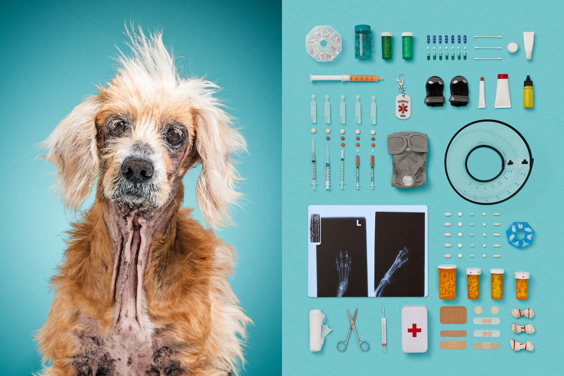 Old-senior-series-dog-portraits-knolling-medical-pills-objects-animal-photographer.jpg