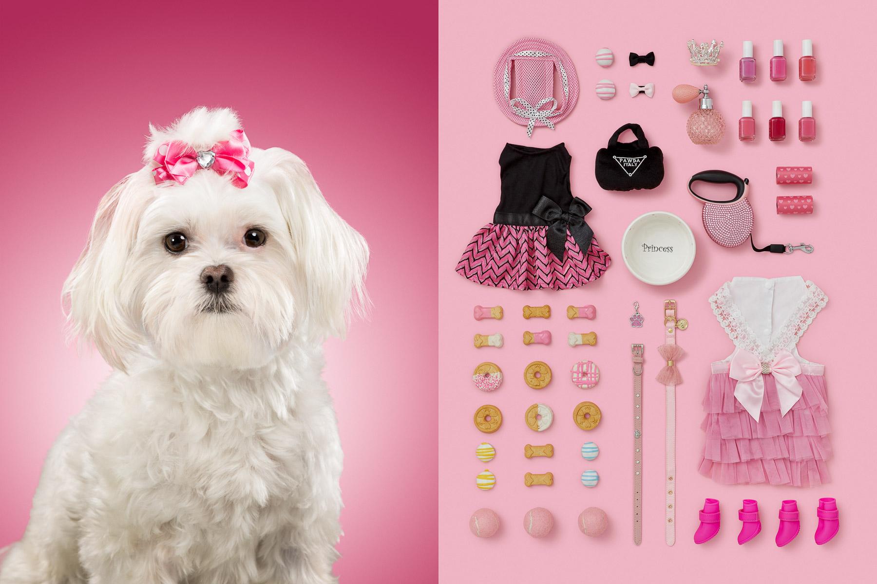 Princess-maltese-series-dog-portraits-knolling-pink-items-princess-animal-photographer.jpg