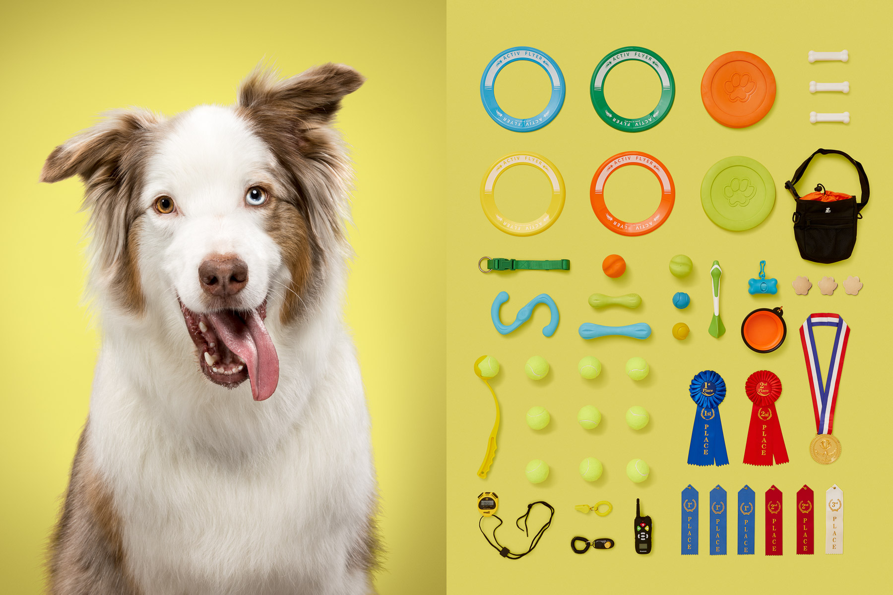 Sports-australian-sheperd-dog-portrait-series-knolling-sports-frisbees-dog-fetching-competition-pet-photographer.jpg