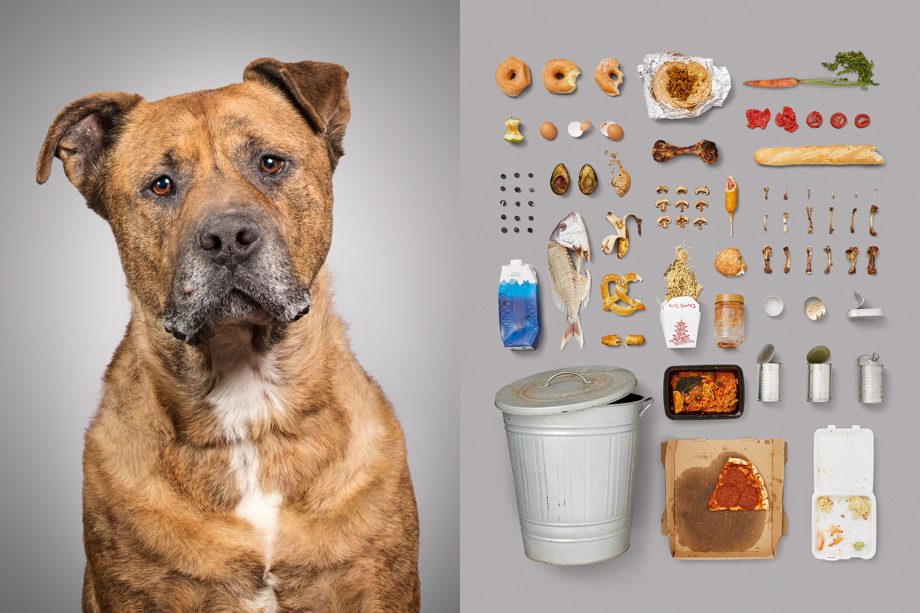 Stray-abandoned-street-dog-rescued-series-dog-portraits-knolling-rotten-food-american-diet.jpg