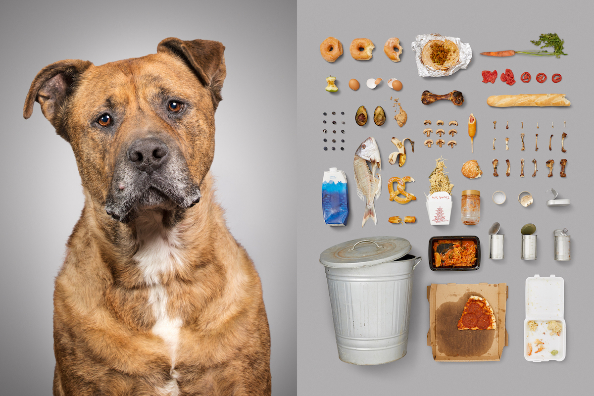 6-Stray-abandoned-street-dog-rescued-series-dog-portraits-knolling-rotten-food-american-diet.jpg