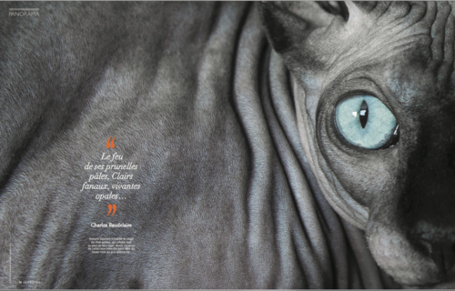 commercial-cat-photographer-sphynx-geo-france-magazine.png