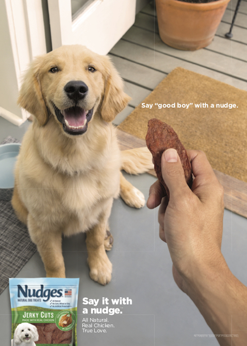 puppy-looking-at-nudges-dog-treats-pet-photographer.jpg