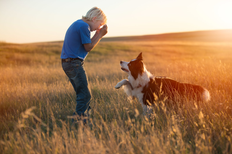 kid-playing-with-dog-hide-seek-outdoors-sunset-dog-photographer.jpg