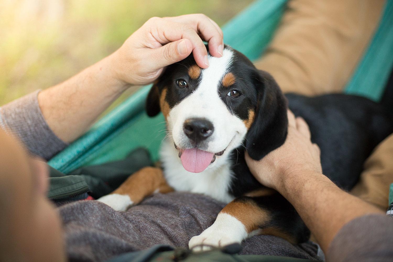 man-petting-dog-hammoc-pet-photographer.jpg