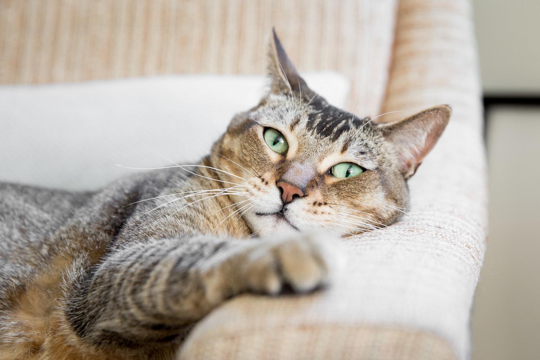 animal-photographer-for-pet-brands.jpg