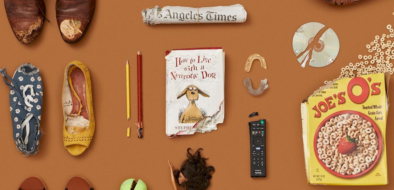 chewed-book-by-dog-training.jpeg