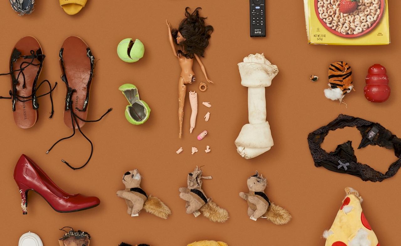 chewed-toys-by-dog-bad-behaviour-destructive.jpeg
