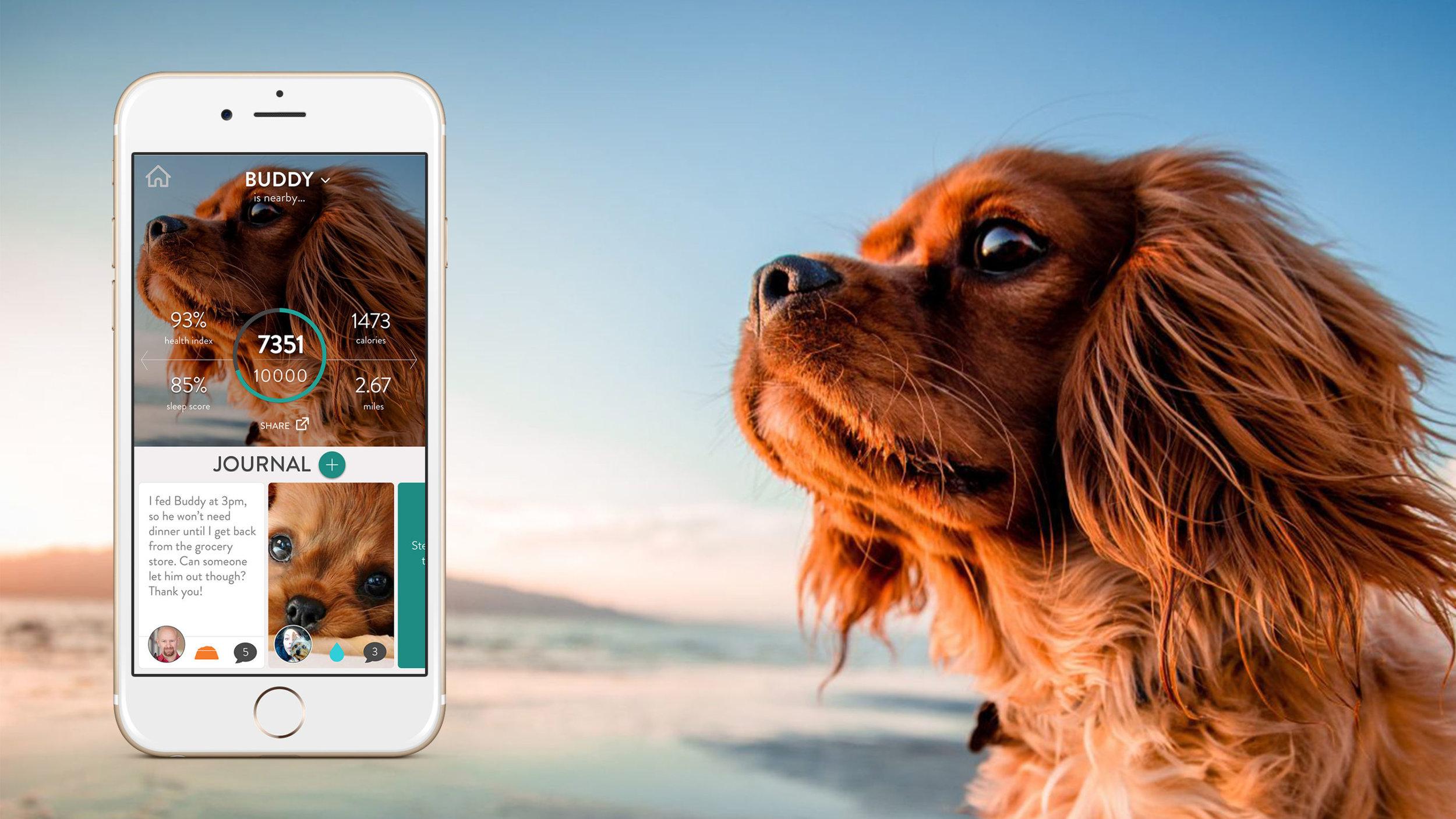 FitBark_Dermatitis-technology-for-pets.jpg