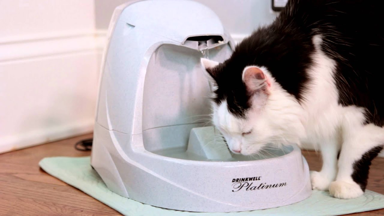 pet-water-fountain.jpg