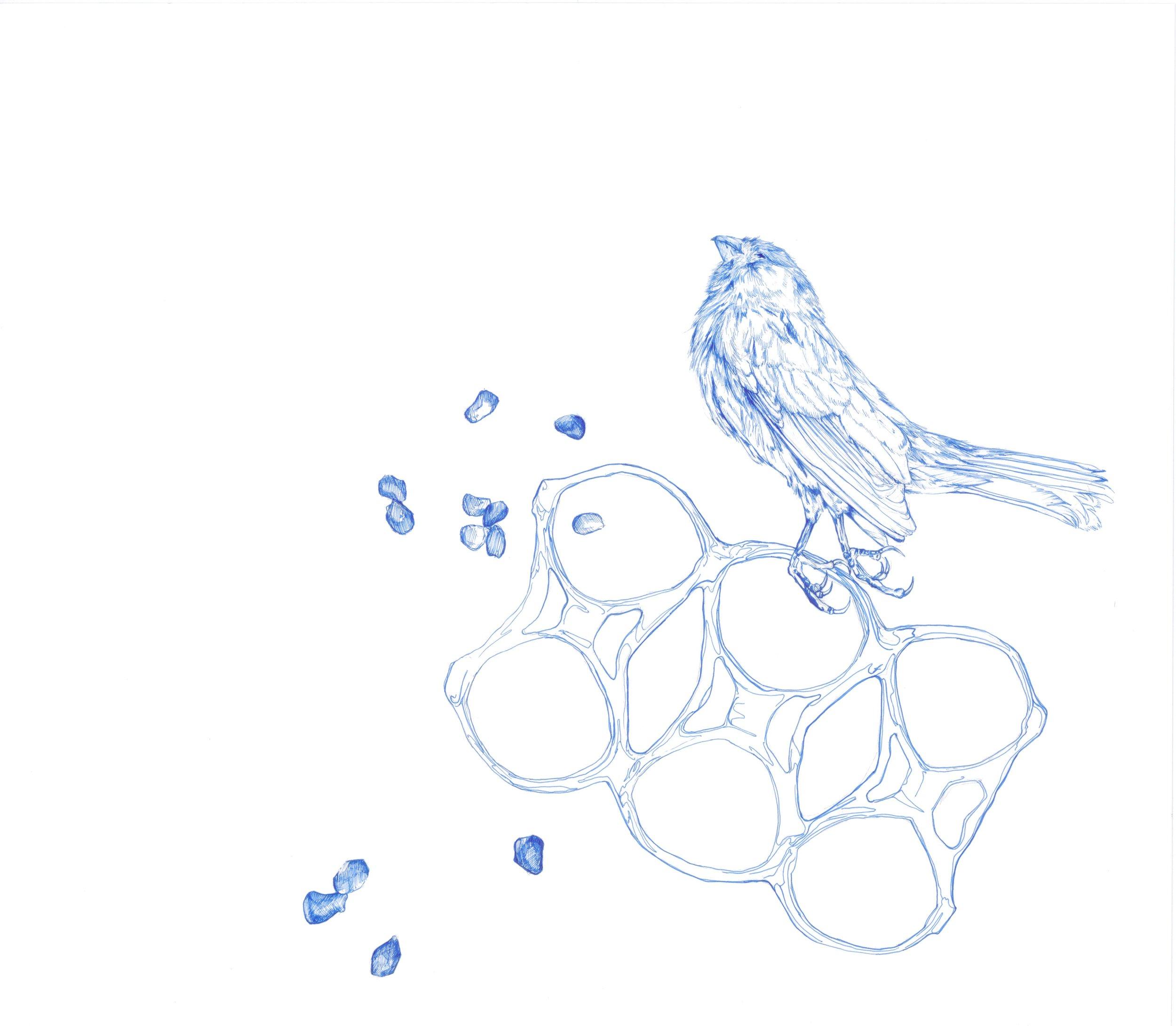 Bird Study 1.jpg