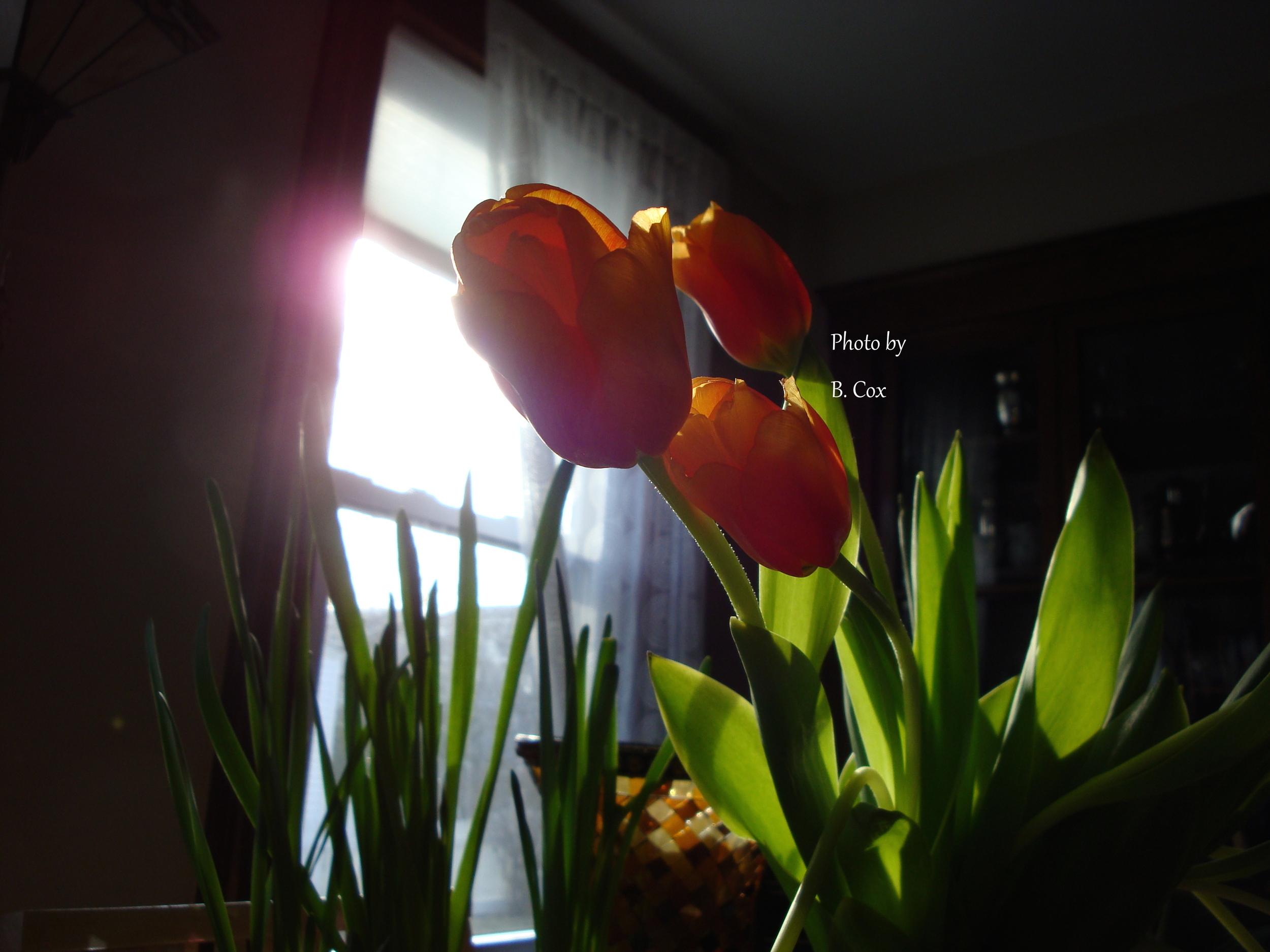 barbaracoxflowers.jpg