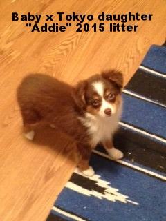 Addie1.jpg