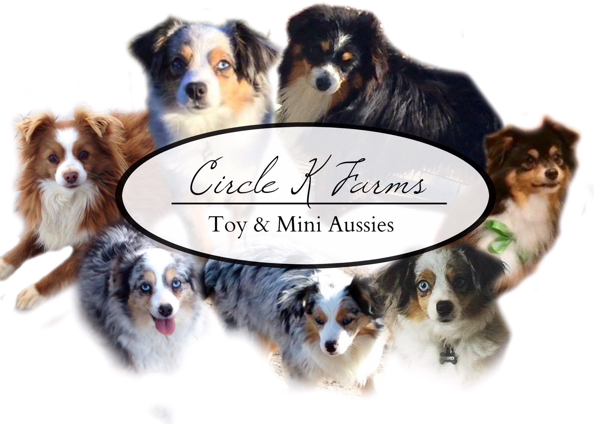 Circle K Farms -Teacup-Tiny Toys-Toys and Miniature