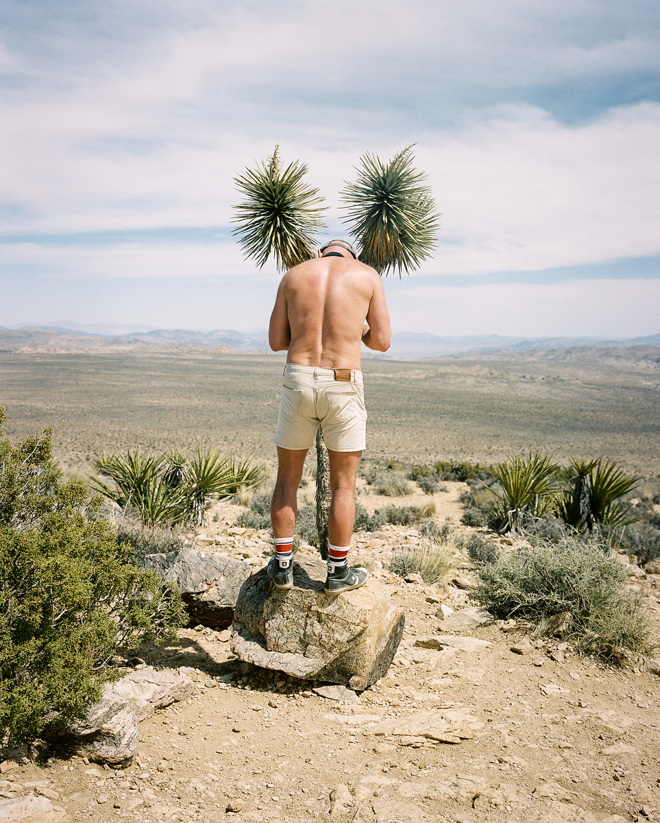 Life at Waist Level (Joshua Tree)