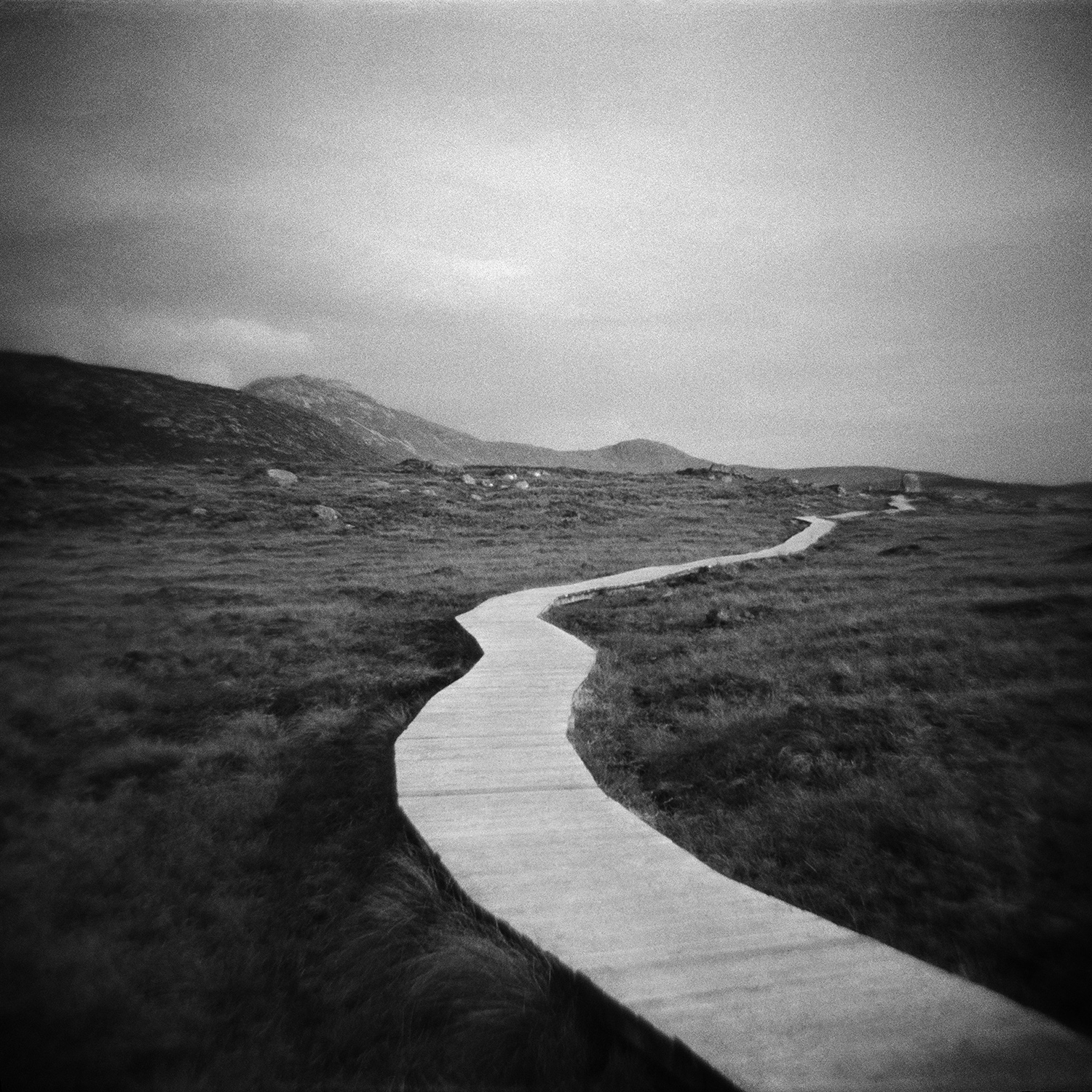 Untitled (path)