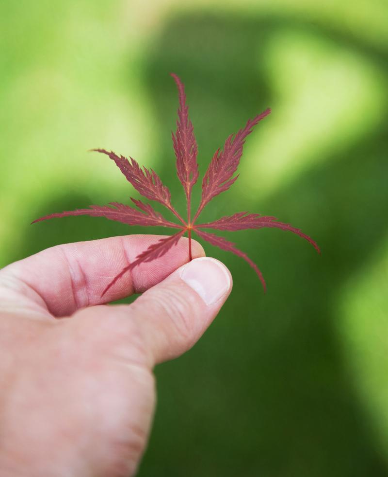 leaf_800