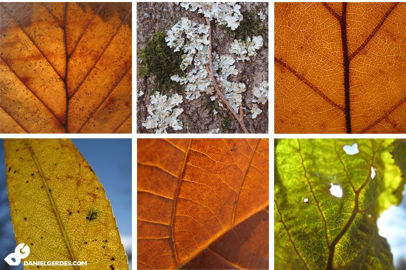 leaves_800x533