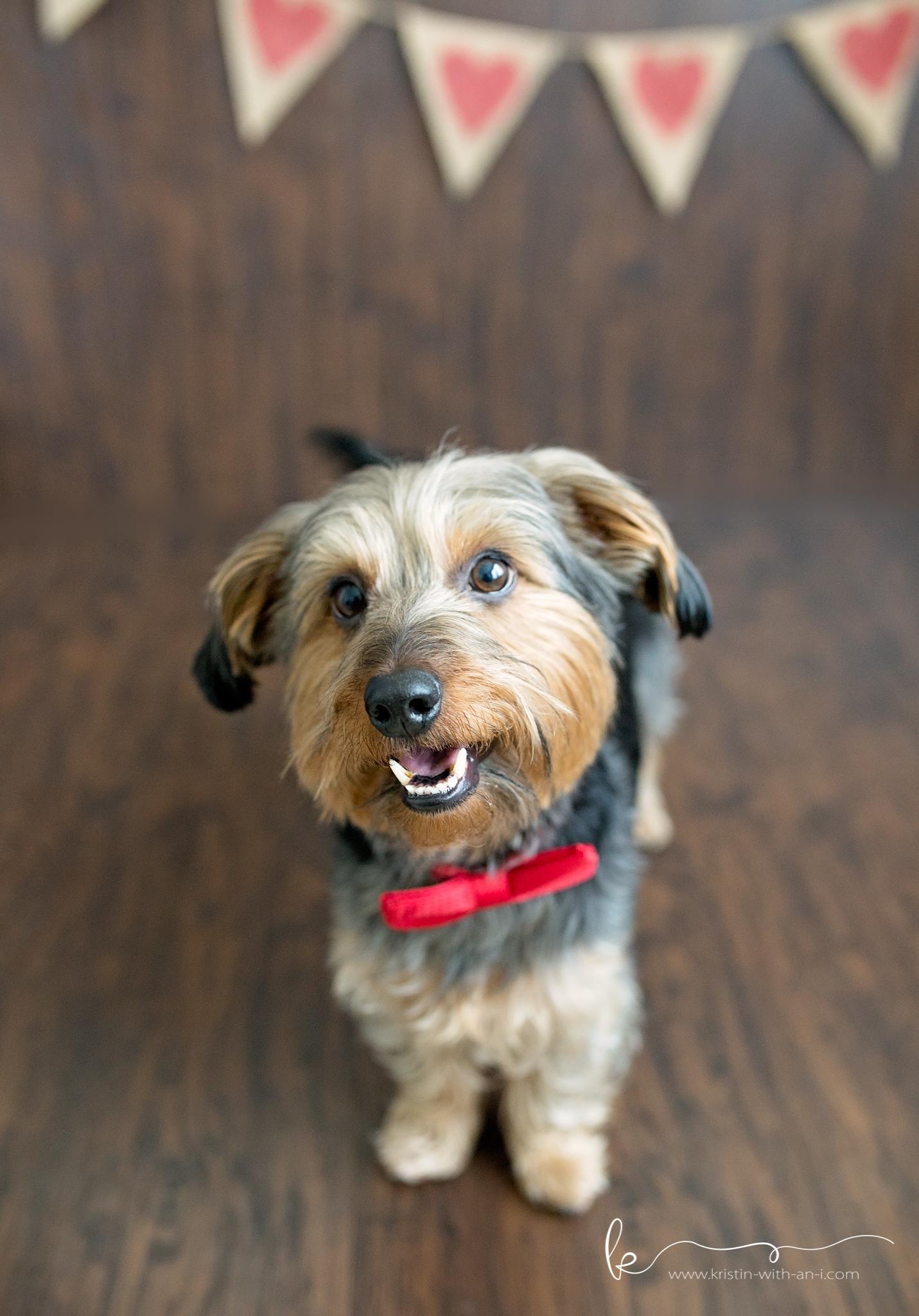 Lehigh Valley Pet Photography