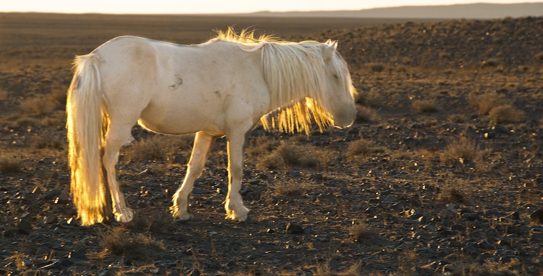 Dusk, Gobi Desert, Mongolia